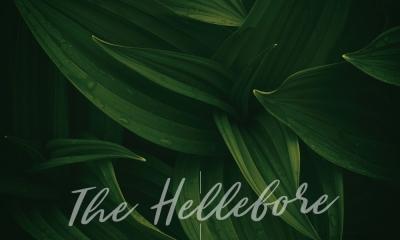 The Hellebore